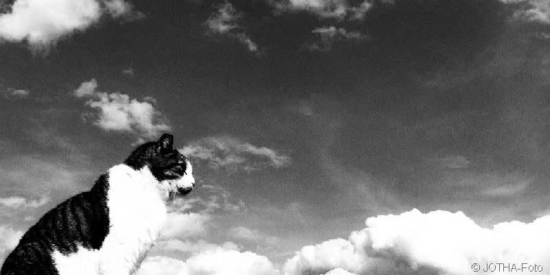 Cat & Clouds