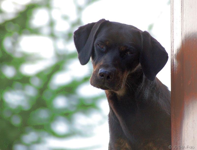 DogPosing