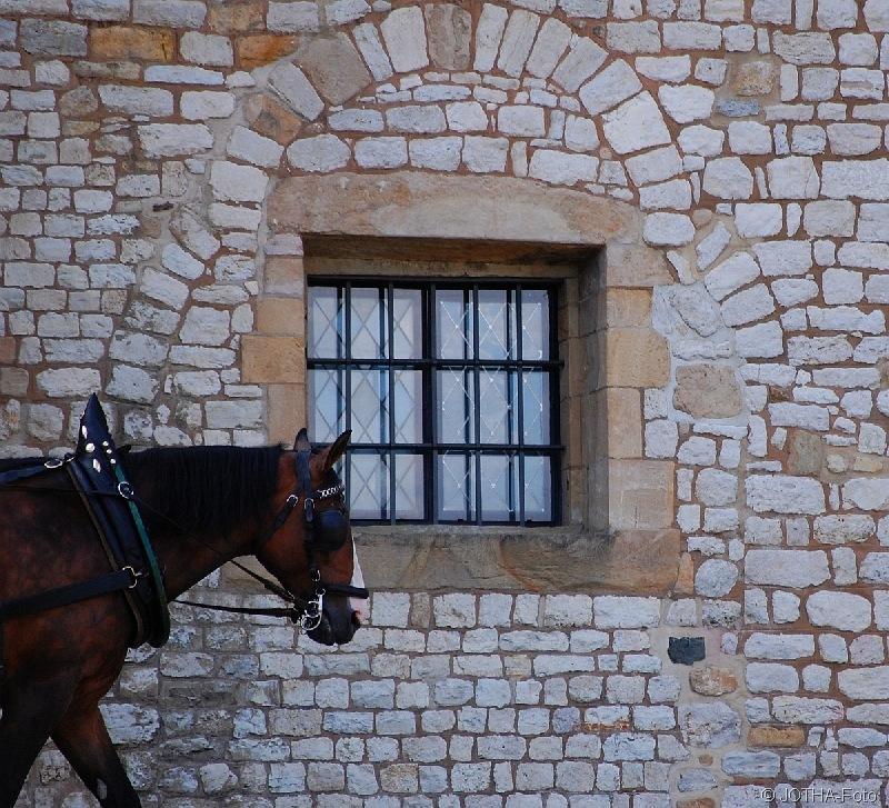 HorsePassing