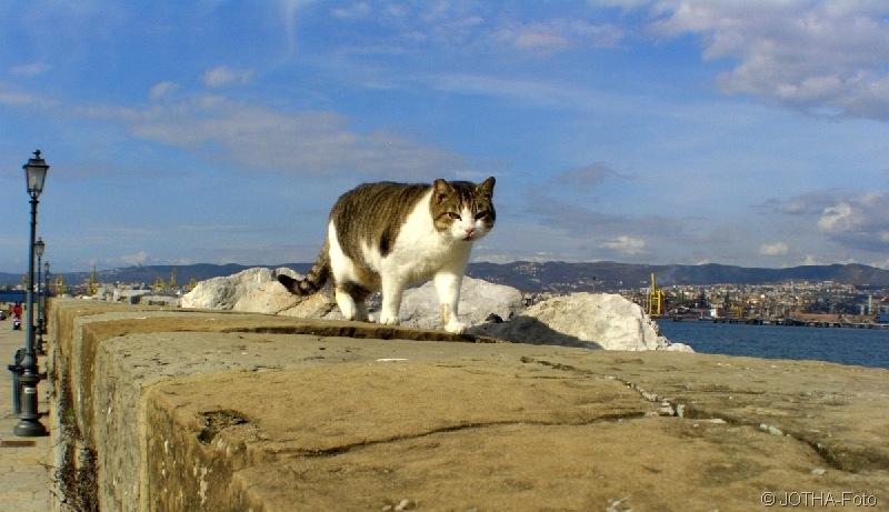Mediteraner Cat-Walk
