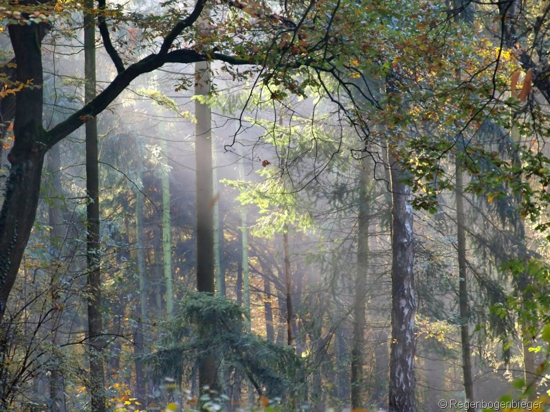 Regenbogenbieger Herbst 16.10.10