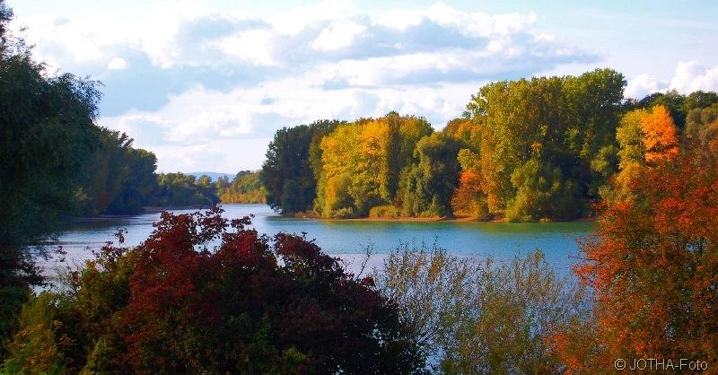 Am Altrhein