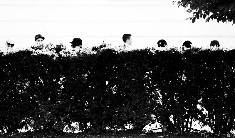 Heads behind Hedge