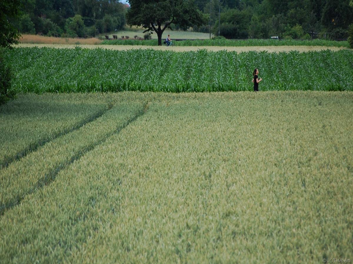 In den Feldern