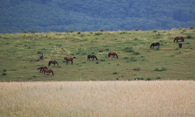 Landschaftsstreifen mit Pferden